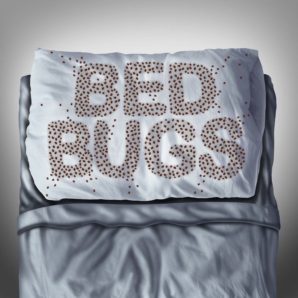 Bed Bugs On Pillow can only be dealt with using a professional bed bug treatment service